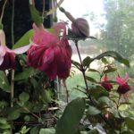 Gardenweek